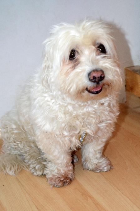 Benny - Wurde 13 Jahre alt.