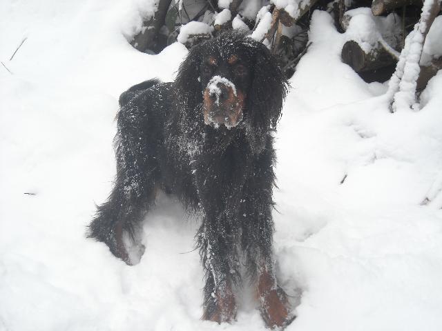 Jago - Wurde 12.5 Jahre alt.